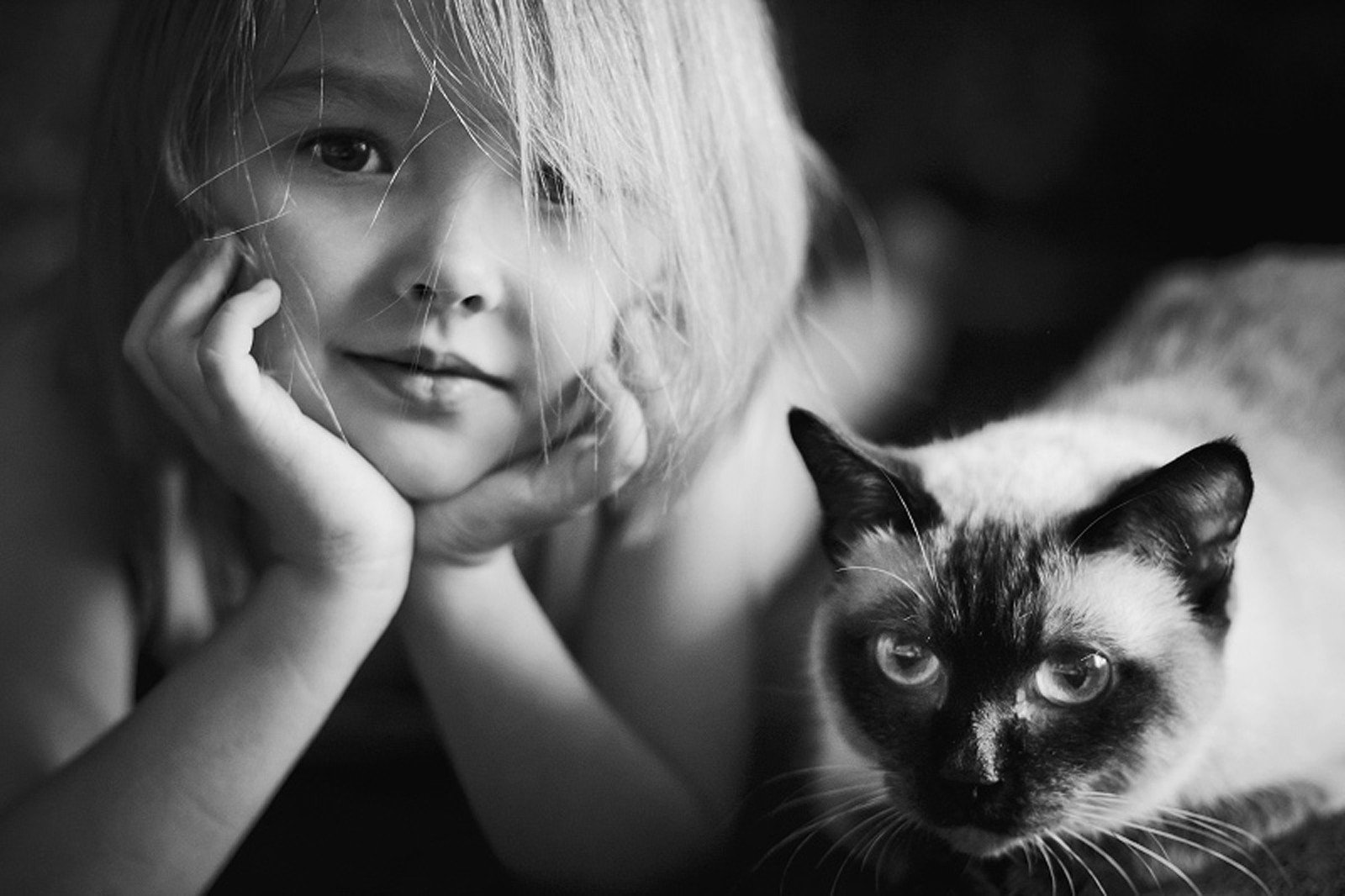 Gatos Amistosos