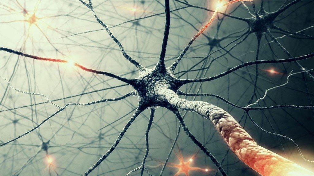 Neuronas Inhibitorias Codificacion Informacion