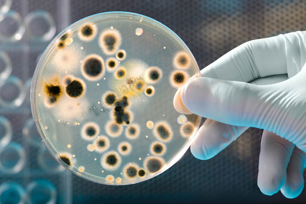 Superbacterias Resistentes