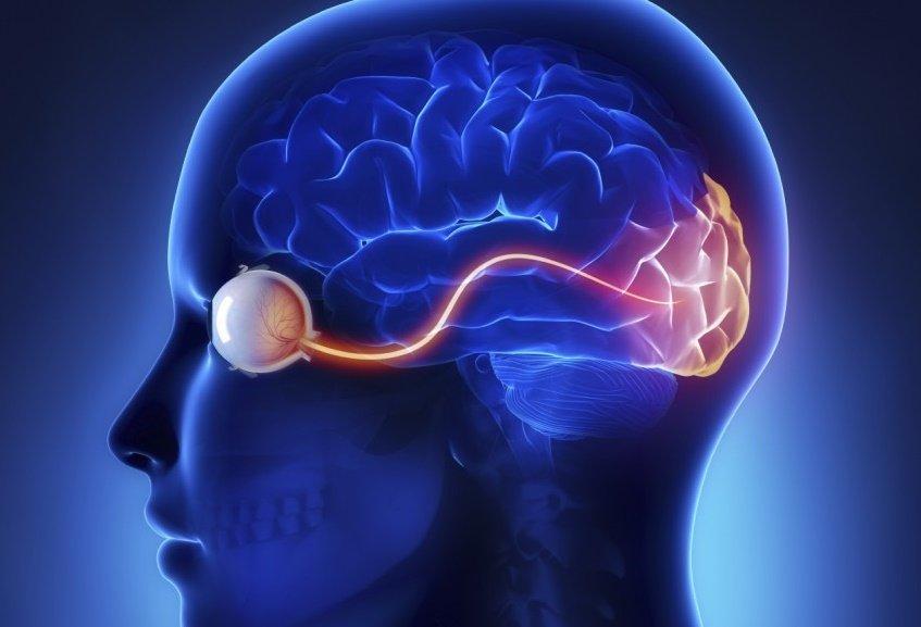 """El cerebro humano puede """"predecir"""" el futuro"""