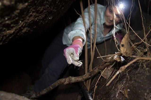 Lauren Esposito sosteniendo una araña