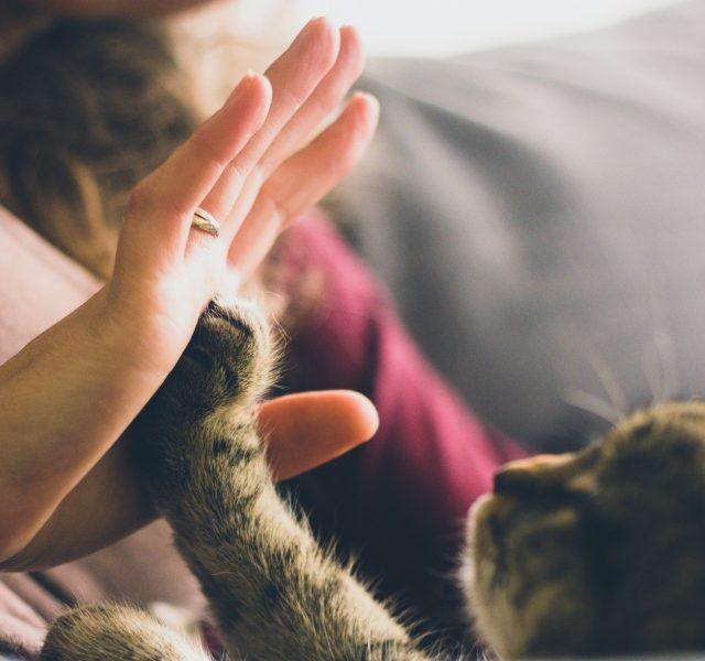Un gato chocando la mano una persona